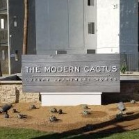 The Modern Cactus
