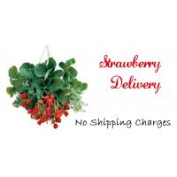 Strawberry Delivery